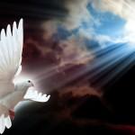 dove-peace-rays