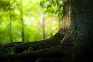 roots-nature-islam